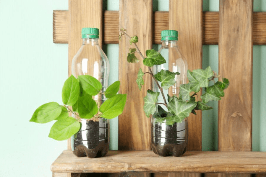 A green plant in a bottle. Climate change is a serious environmental concern.
